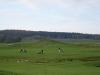 golf-saisonabschluss-golfen-mv-3